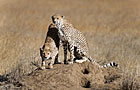 Serengeti NP Wildlife Photos