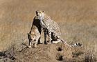 Serengeti NP Wildlife Photos