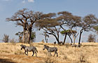 Tanzania Dry Season Photos