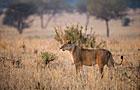 Tanzania Wildlife Photos
