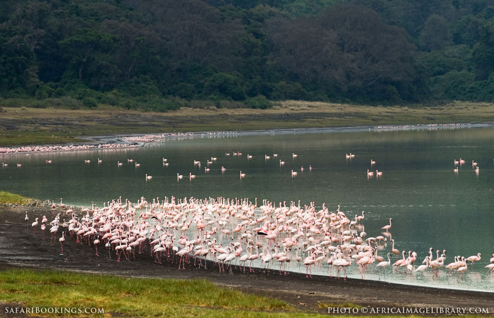 Flamingos in Empekaai Crater in Ngorongoro Conservation Area, Tanzania