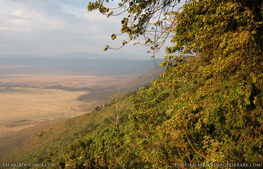 Heroes point, view from Ngorongoro crater rim to the crater floor in Ngorongoro Conservation Area, Tanzania