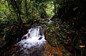 10-Day Rafting, Rwenzori Mountains & Gorillas Safari
