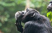 4-Day Chimpanzee & Lake Mburo Game Safari