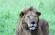 8-Day Big Five Safari
