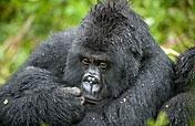Mgahinga Gorilla NP Photos