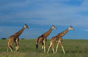 3-Day Murchison Falls Safari - Budget Option