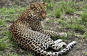 11-Day Discover Western Uganda Safari