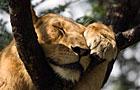 Queen Elizabeth NP Wildlife Photos