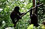 3-Day Gorilla Uganda Gorilla Tracking