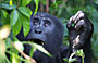 11-Day Active Uganda More Wild Safari