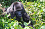 5-Day Queen Elizabeth, Bwindi Impenetrable National Park
