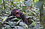 10-Day Wild Uganda with Double Epic Gorilla Trekking