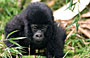 3-Day Gorilla Tracking Express
