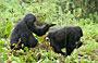 3-Day Uganda Gorilla Tracking-Bwindi Impenetrable
