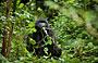 9-Day Gorilla and Chimpanzee mid-Range - Luxury Safari