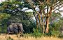 3-Day Safari to Medley of Wonders Queen Elizabeth