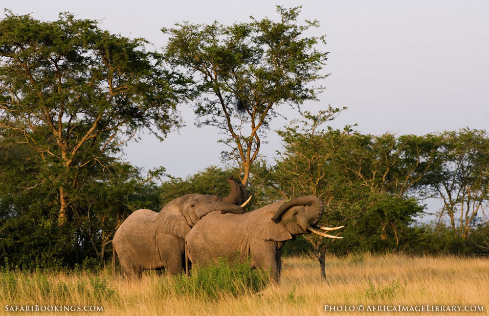 National Geographic Tours Africa >> Queen Elizabeth National Park – Travel Guide, Map & More!