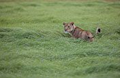 3-Day Lodge/Treehouse Kruger Park Safari