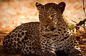 7-Day Victoria Falls & Luangwa Big Game Safari