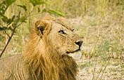4-Day Kruger Park Big 5 Wildlife Safari