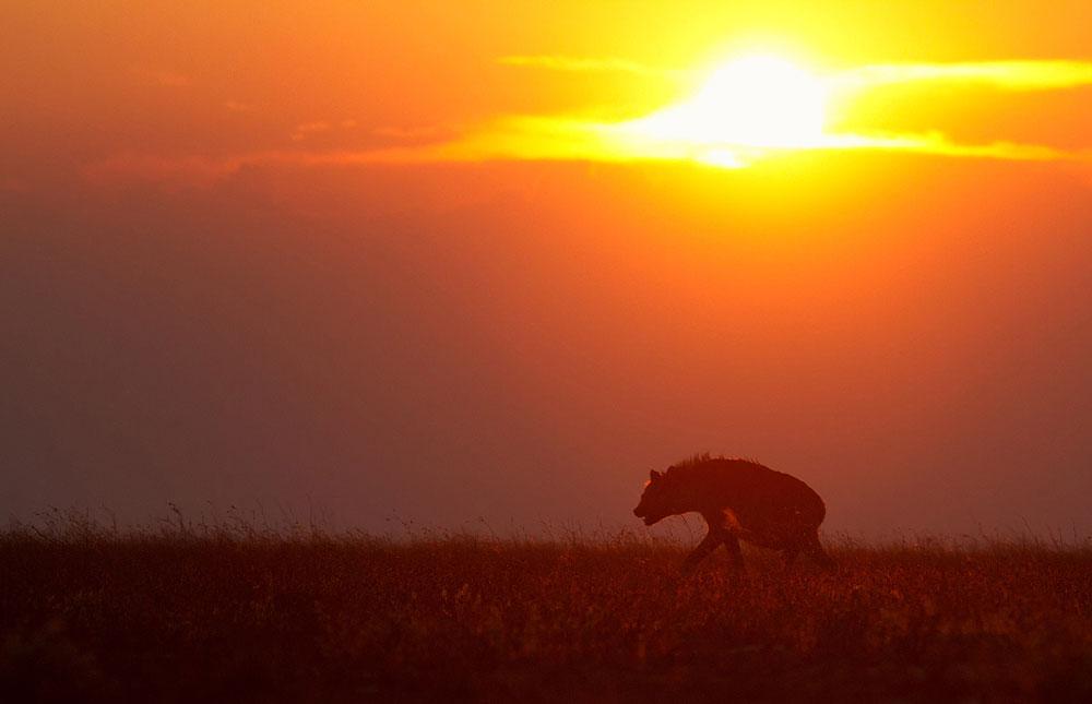 African Plains Sunset