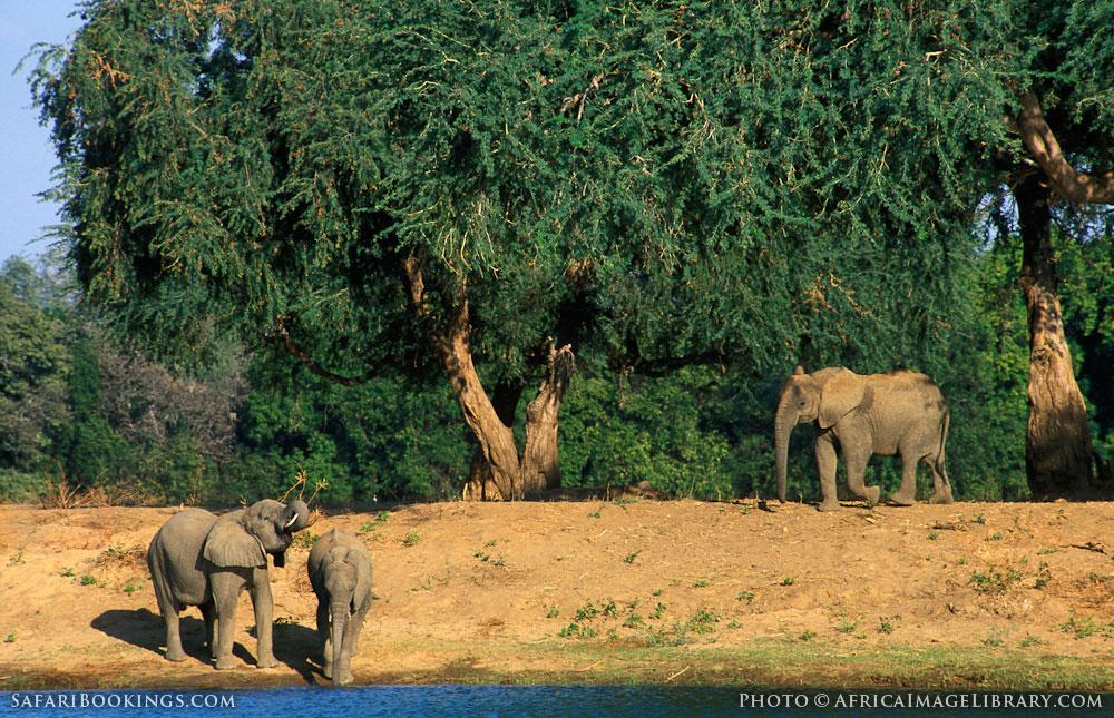 Lower Zambezi National Park – Travel Guide, Map & More!