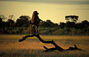 5-Day Southern Kruger Camping Adventure