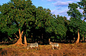 4-Day Ruaha National Park