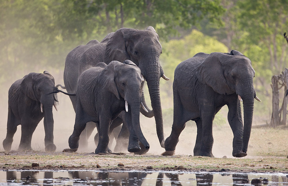 Elephants gathering by the water in Hwange National Park, Zimbabwe
