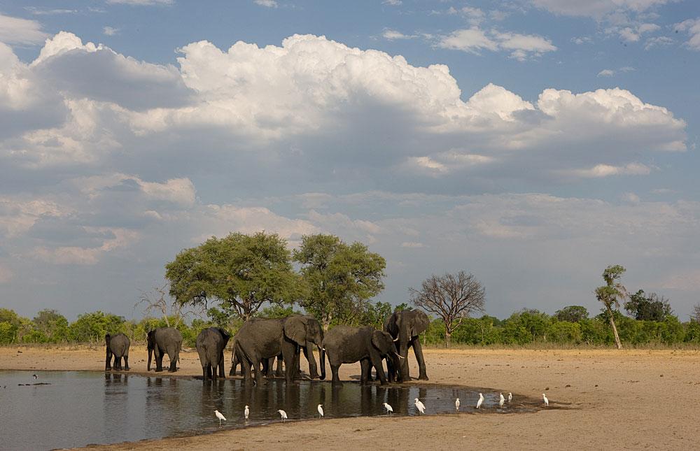 Elephants drinking in Hwange National Park, Zimbabwe