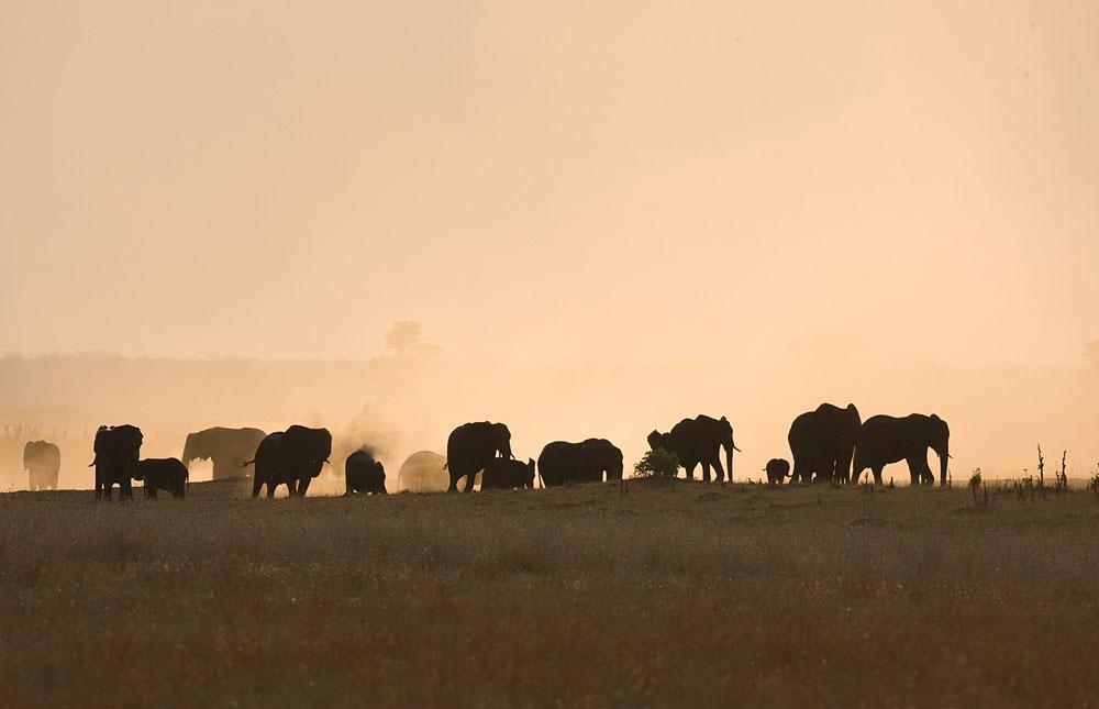 Elephants on a dusty horizon in Hwange National Park, Zimbabwe