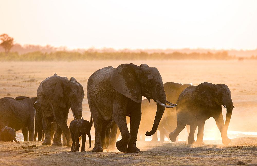 Elephants leaving the water in Hwange National Park, Zimbabwe