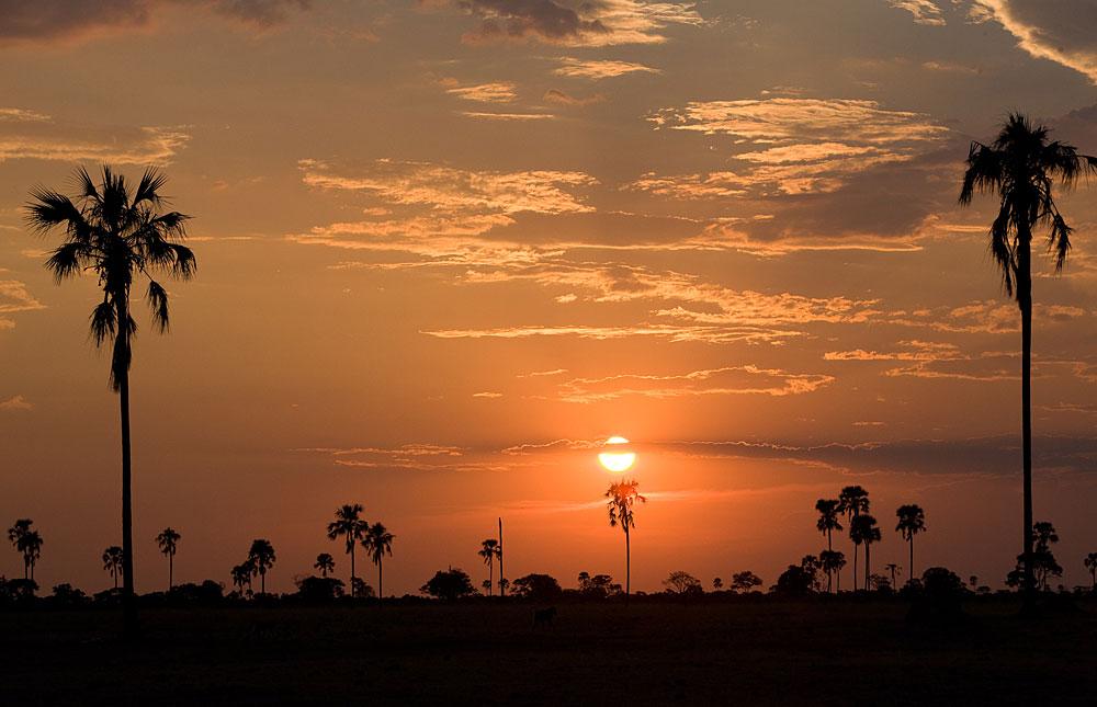 Palm trees at sunset in Hwange National Park, Zimbabwe