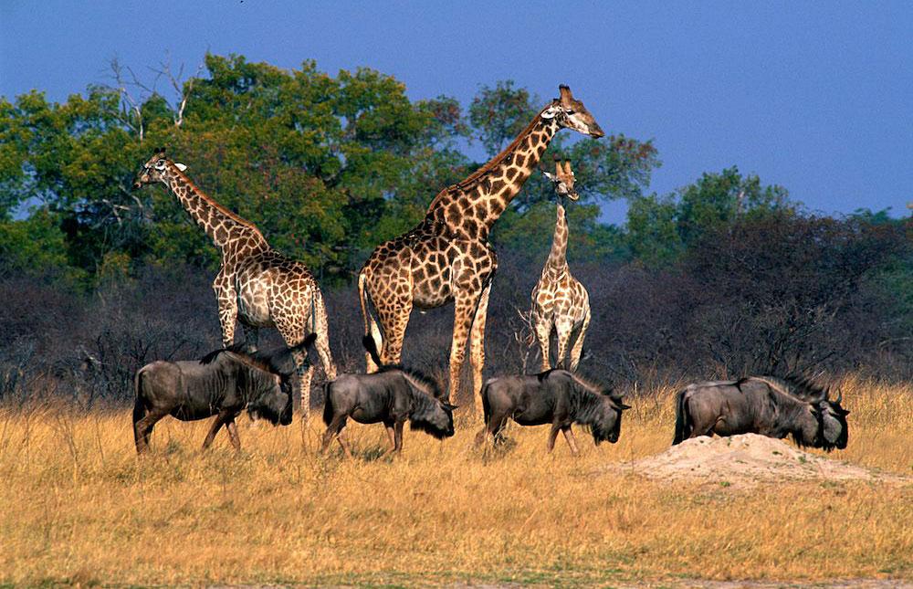 zimbabwe wildlife photos award winning images amp pictures