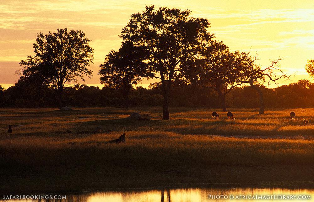 Ostrich at sunrise in Hwange National Park, Zimbabwe