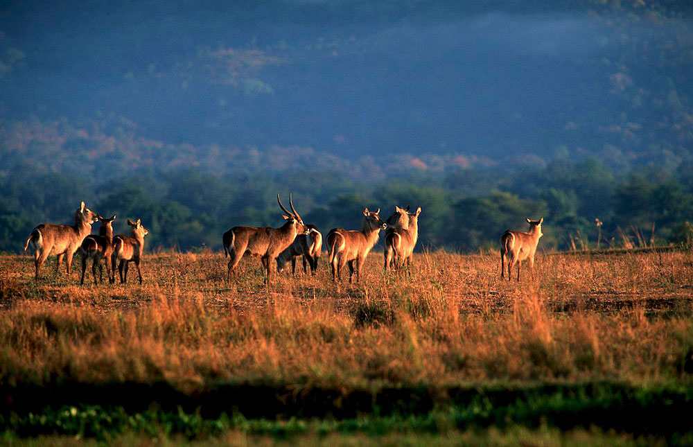 Expert Rating Reviews >> Mana Pools National Park – Travel Guide, Map & More!