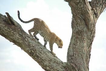 Milestone Safaris Photo