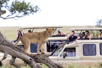Guruguru Safaris Ltd Photo