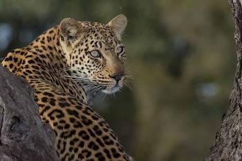 African Sky Safaris & Tours Photo