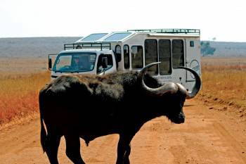 The Bundu Safari Company Photo