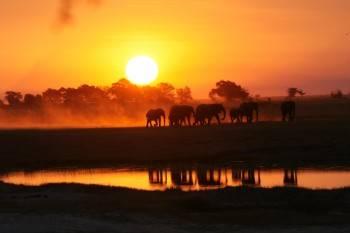 African Jacana Safari Tours Photo