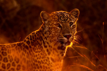 Safari Lux Photo