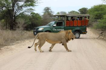 Viva Safaris Photo