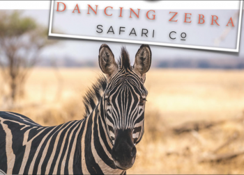 Dancing Zebra Safari Co Photo