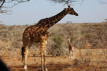 African Landmark Safaris Photo