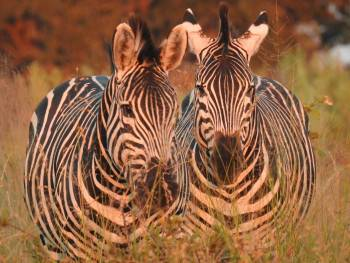 Tutwa Safaris  Photo