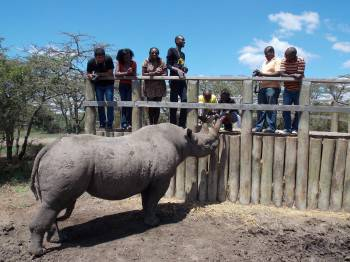 Feeding a blind rhino at Ol Pejeta Conservancy.