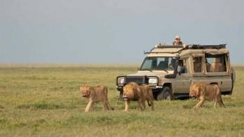 Kiliholidays clients during the safari Serengeti