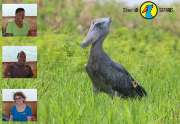 Shoebill SAFARIS Photo